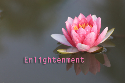 lotus-flower-pink-enlightenment